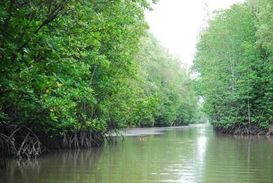 Sundarbans National Park, West Bengal, India